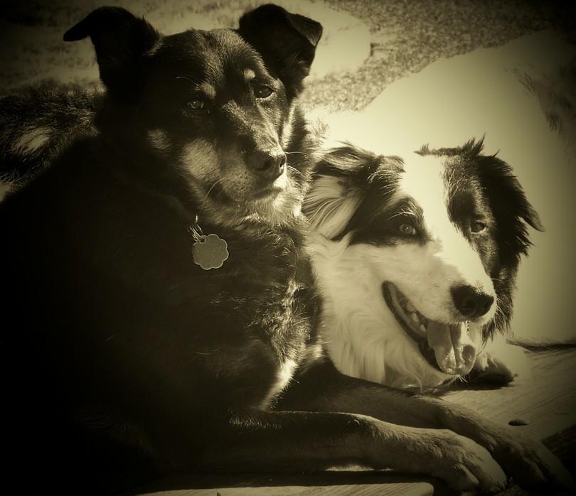 spotlight dogs
